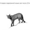 50 Цікавих фактів про кішок