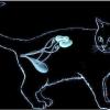 Хвороби нирок у кішок