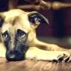 Хвороби суглобів у собак