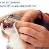 Хвороби зубів у кішок