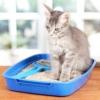 Чим лікувати пронос у кішки