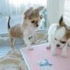 Чим лікувати пронос у кошеняти - поради та рекомендації