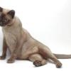 Чим краще годувати кішку - поради та рекомендації