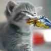 Чим не можна годувати кішок