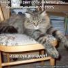 Що робити якщо кішку рве?