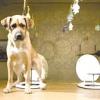 Що робити і як відучити собаку гадити і писати в домі?