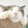 Чумка у кішок, симптоми і лікування
