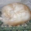 Цистит у кішки - лікування