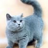 Скільки років живуть кішки?