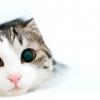 Глисти у кішок і котів. як вивести глистів у кішок