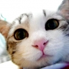 Грижа у кішок