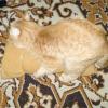 Штучна кішка для домашнього кота