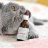Як діє валеріанка на котів