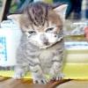 Як навчити кошеня їсти самостійно