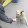 Як навчити собаку перестати брати їжу біля чужих?
