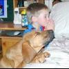 Як навчити собаку слухатися? що робити для поліпшення послуху?