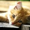 Як назвати руде кошеня