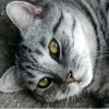 Як назвати сірого кошеня