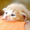 Як визначити вік кошеня