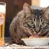 Як відучити кішку від штучних кормів?