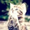 Як привчити кішку писати де попало