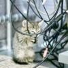 Як відучити кота гризти дроти