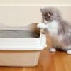 Як відучити кошеня гадити де попало