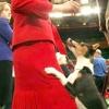 Як відучити стрибати лапами на господаря цуценя або собаку?