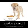 Як відучити цуценя або собаку підбирати їжу на вулиці?