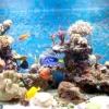 Як підготувати акваріум для рибок