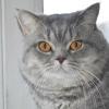 Як підібрати харчування для кастрованого кота?