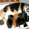 Як допомогти кішці при пологах?