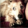 Як допомогти собаці впоратися зі страхом перед людьми, тваринами та гучними звуками?