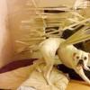 """Як правильно покарати цуценя або собаку за допомогою команди """"фу""""?"""
