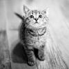 Як правильно вибрати здорового кошеня і де його краще купити?