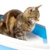 Як привчити кішку до туалету?