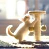 Як привчити кошеня до когтеточке?