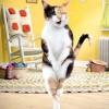 Як привчити кошеня, кота, кішку до лотка
