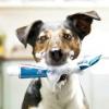 Як вирішити проблеми в поведінці собаки або цуценя?
