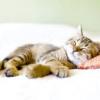 Як містити кішку в квартирі