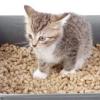 Як вибрати наповнювач для котячого туалету