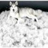 Які породи собак майже не линяють?