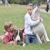 Найкращі породи собак для сім'ї з дітьми.
