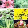 Кімнатні рослини, отруйні для кішок