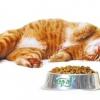 Корм для кішок brit - огляд, відгуки, рекомендації