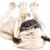 Опис породи собак мопс і догляд за породою.
