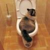 Пронос у кота