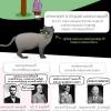 Найцікавіші та смішні факти про кішок