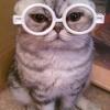 Симптоми і лікування циститу у кішок