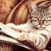Скільки років живуть кішки